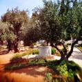 © Killzero Hitori   Jerusalem   Иерусалим. Гефсиманский сад