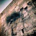 © Killzero Hitori   Jerusalem   Иерусалим. Стена Плача