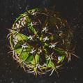 © Killzero Hitori | Cactaceae