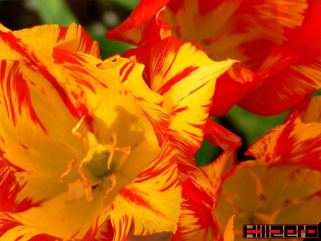 Весна, цветочный снег, огонь и дурачок...