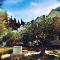 © Killzero Hitori | Jerusalem | Иерусалим. Гефсиманский сад