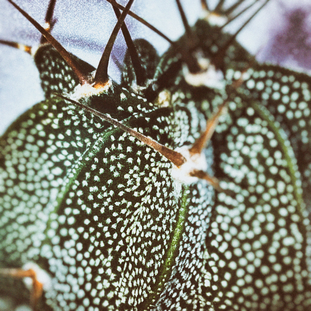 ©-Killzero-Hitori-Cactaceae